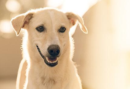 מבריק דיני בעלי חיים | תחומי התמחות | בן קרפל משרד עורכי דין GY-59